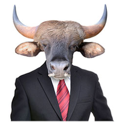 what_judges_want_bull.jpg